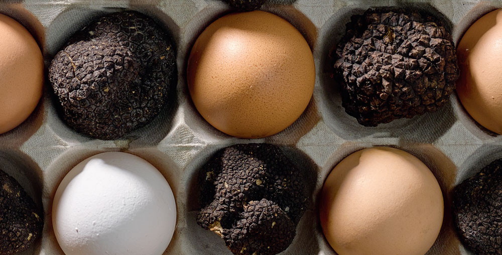 Most Expensive Eggs Ever