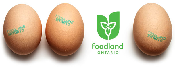 Our Ontario eggs are packed in cartons sporting  the Foodland Ontario logo   – because we're Ontario local and proud of it!