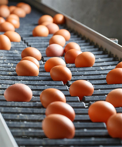Learn about the people who get GoldEgg eggs from Ontario farmers to you.